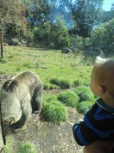 Vendo o urso símbolo da Califórnia - Zoológico de São Francisco