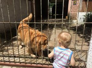 Dizendo tchau para o cachorro mais amigo da vizinhança!